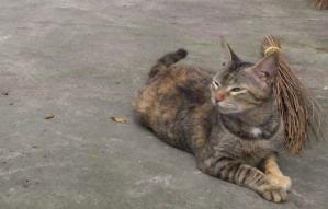 kitcat.png