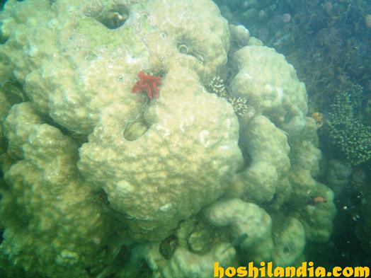 Coral sa Honda Bay Puwerto Princesa