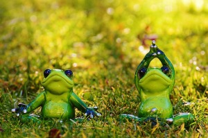 frogs-1109775_640